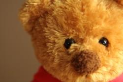 Teddy close-up